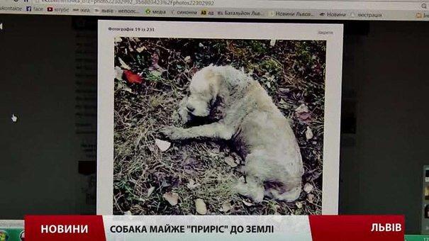 Для порятунку безпритульного собаки львів'яни зібрали понад ₴5 тис.