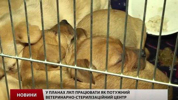 """ЛКП """"Лев"""" анонсувало велику програму стерилізації вуличних собак"""