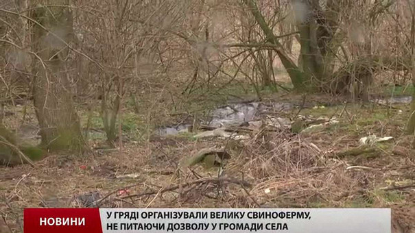 Власники свиноферми під Львовом судяться за землю для бійців АТО