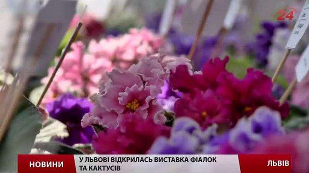 У Львові відкрилась виставка фіалок та кактусів