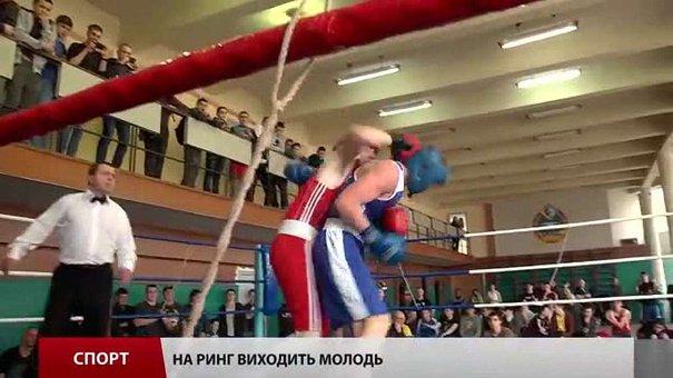 Завершується першість області з боксу