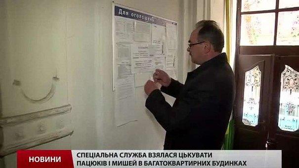 Відсьогодні львівські комунальники відкрили полювання на пацюків