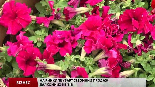 На ринку «Шувар» сезонний продаж балконних квітів