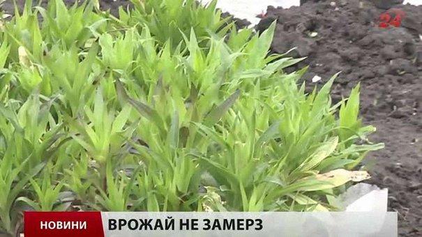 Головні новини Львова за 21.04