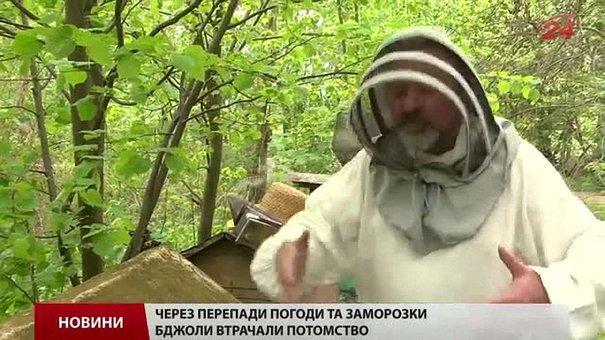 Ціна на мед цьогоріч зросте щонайменше наполовину