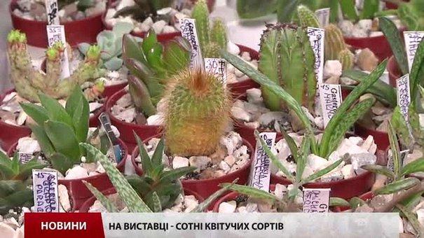 На виставці квітів у Львові запрезентовано сотні фіалок і кактусів