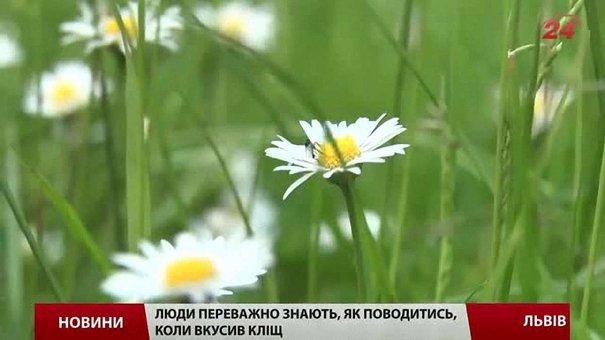 Львів'ян просять три дні не відвідувати міські парки