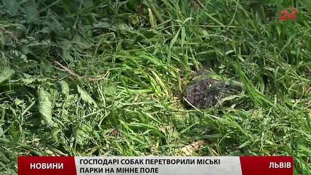 У Львові відкриють перший вигульний майданчик для тварин