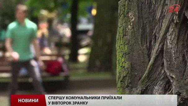Каштани на площі Святого Юра у Львові зрізали невідомі