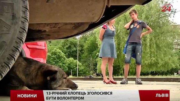 У Львові на кожного безпритульного пса – «особисте досьє»