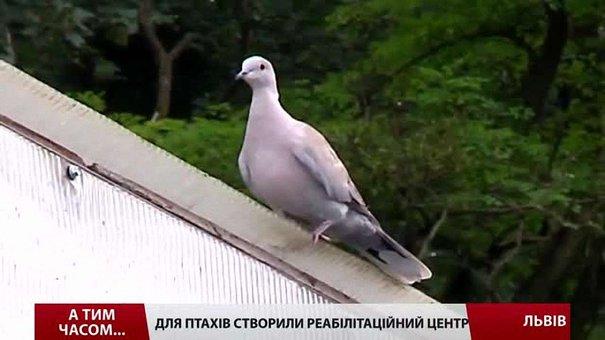 Для птахів у Львові створили реабілітаційний центр
