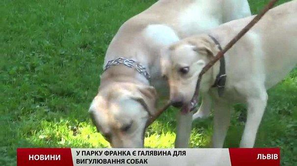 У Львові встановлять смітники для собачих фекалій