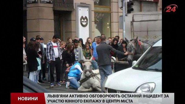Власників коня, який впав у центрі Львова, можуть позбавити дозволу на роботу в центрі
