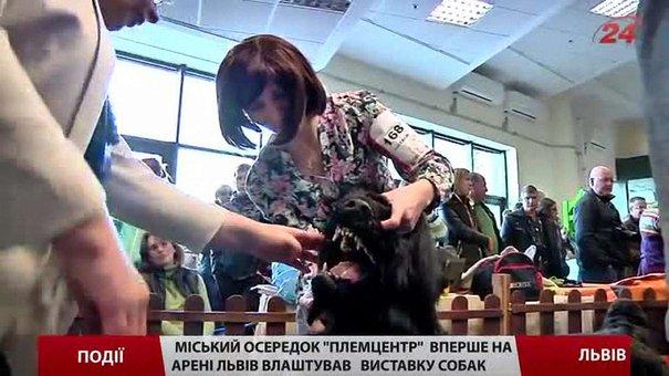 Львівський міський осередок «Племцентр» влаштував міжнародну виставку собак