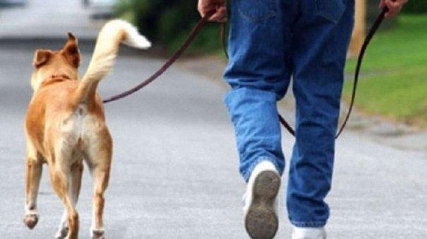 На Сихові створять станції для прибирання за собаками