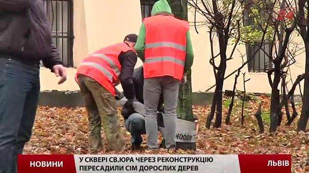 Біля собору св. Юра у Львові пересадили дерева