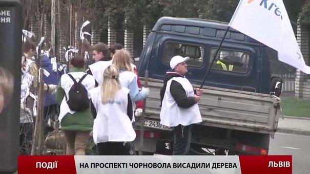 Проспект Чорновола продовжують озеленювати