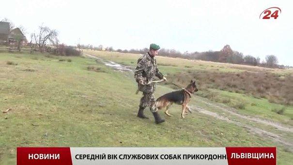 Кінологи-прикордонники вчать собак розміновувати поля та шукати вибухівку на людині
