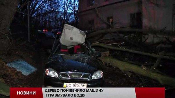 Через падіння ще одного дерева у Львові постраждали водій та пасажир таксі