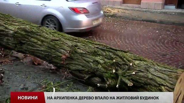 Зламане дерево у Львові, яке травмувало дитину, вчасно не дозволили зрізати мешканці