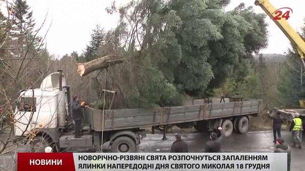 Головну ялинку Львова привезли з Карпат в супроводі поліції