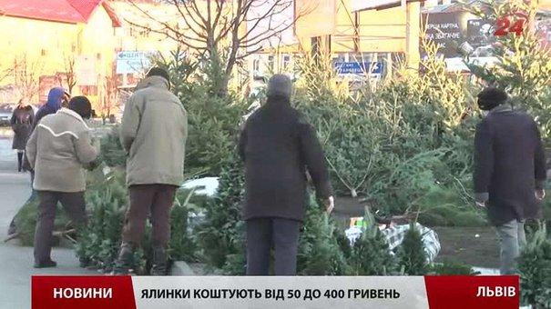 Цього року у Львові новорічні ялинки дорожчі, ніж торік
