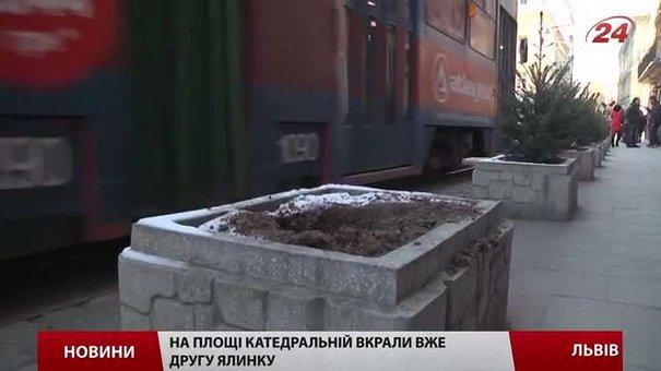 У центрі Львова крадуть висаджені ялинки