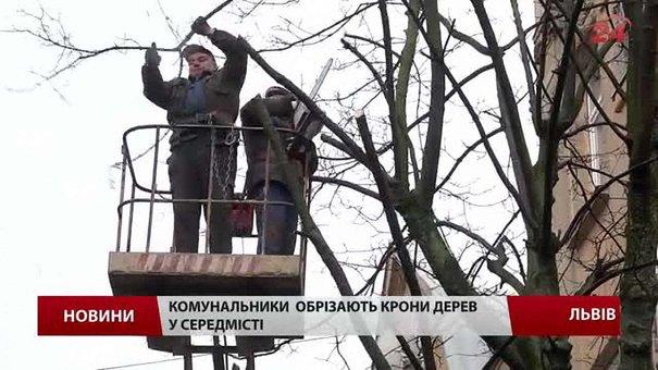 У середмісті Львова комунальники обрізають дерева