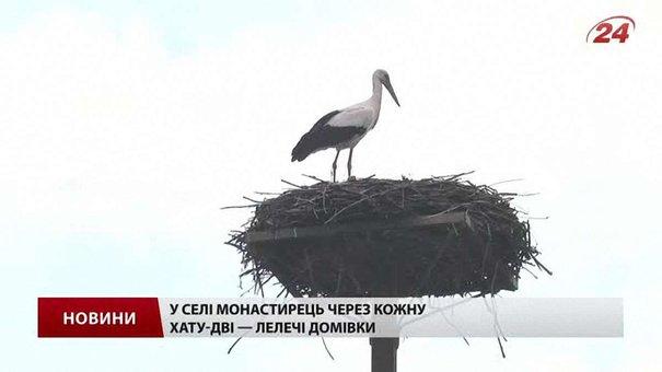 На Львівщині енергетики зводять платформи для лелечих гнізд