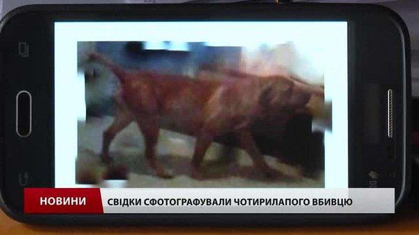 У Львові розшукують собаку, який на очах у дитини загриз її улюбленця і забіг до школи