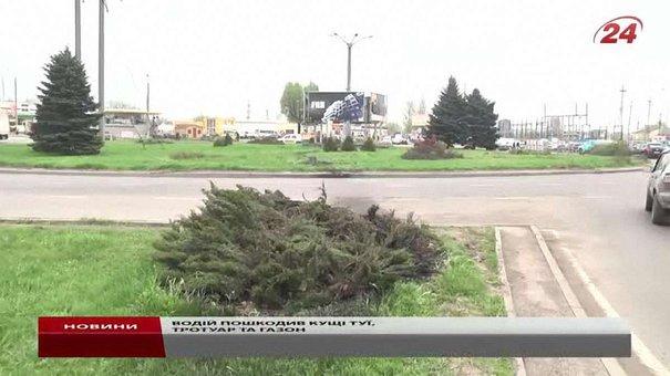 П'яний водій у Львові зламав висаджені на газоні туї