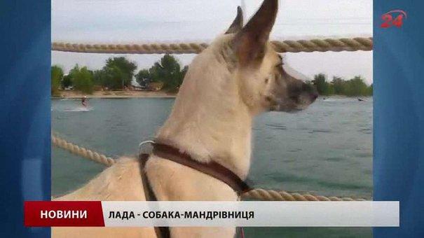 Львівська собака-альпіністка підкорила двадцять вершин