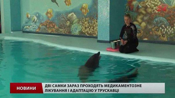 Дельфіни, яких начебто вкрали у Вінницькій області, знайшлися в Трускавці