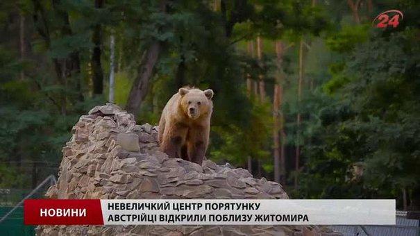 На Львівщині почали будувати притулок для ведмедів