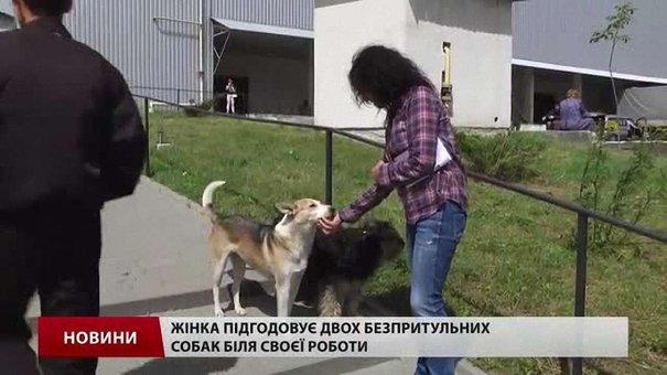 Львів'ян запрошують стати волонтерами для перепису безпритульних собак