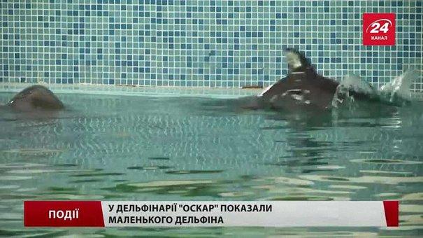 У дельфінарії «Оскар» показали маленького дельфіна