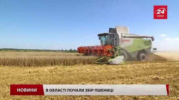 На Львівщині стартували пшеничні жнива