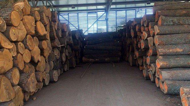 Львівська прокуратура затримала організатора незаконного експорту лісу в ЄС
