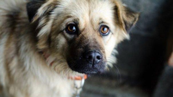 У Львові зафіксовано найменше безпритульних собак в Україні