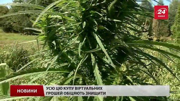 У селі під Львовом знайшли плантацію коноплі на півмільйона гривень