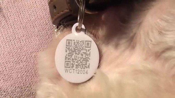Власників собак у Львові зобов'язали зареєструвати їх з 1 вересня