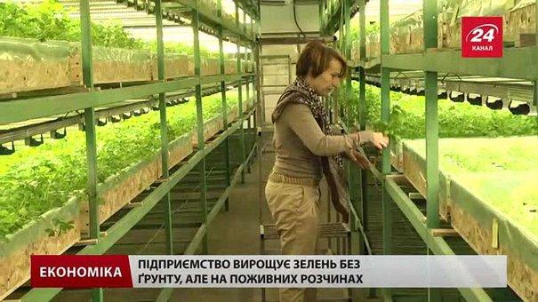 На Львівщині єдине підприємство в Україні вирощує зелень унікальним методом