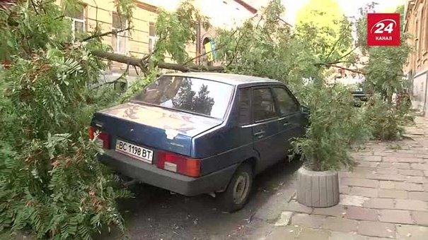 На вулиці Лисенка у Львові дерево впало на автівку