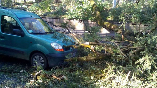 На автомобіль під час руху у Львові впало дерево
