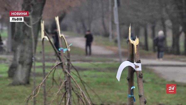 На просп. Чорновола у Львові невідомі поламали висаджені напередодні дерева