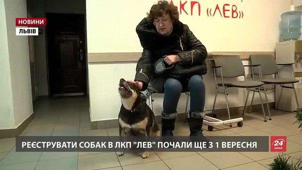 Львів'ян, які не зареєстрували тварин, з 1 січня чекає штраф