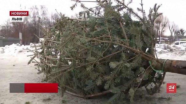 Пункти прийому утилізації святкових ялинок діють у Львові до суботи