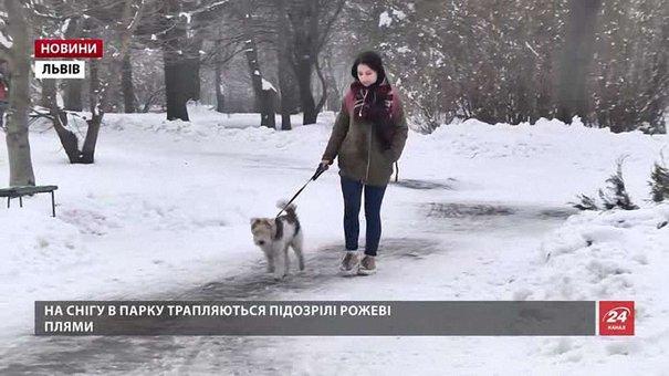 У Львові собака помер через отруту на вулиці
