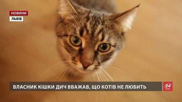 1 березня – Всесвітній день котів