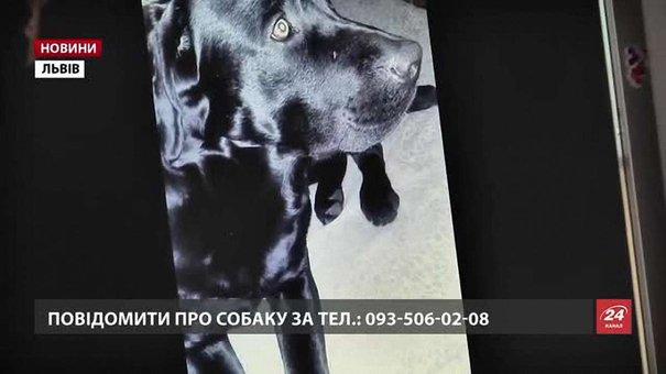 У Львові шукають легендарного чорного лабрадора